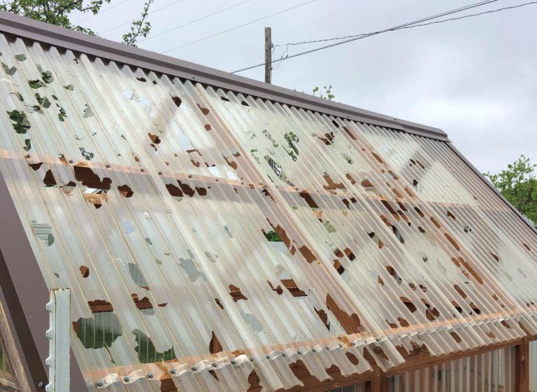 Hail Damaged Asphalt Shingles in St. Louis Missouri